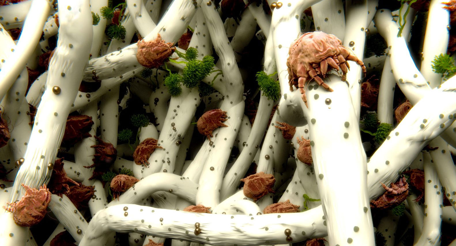 Come Uccidere Acari Della Polvere tutti i tipi di polvere possono provocare allergia