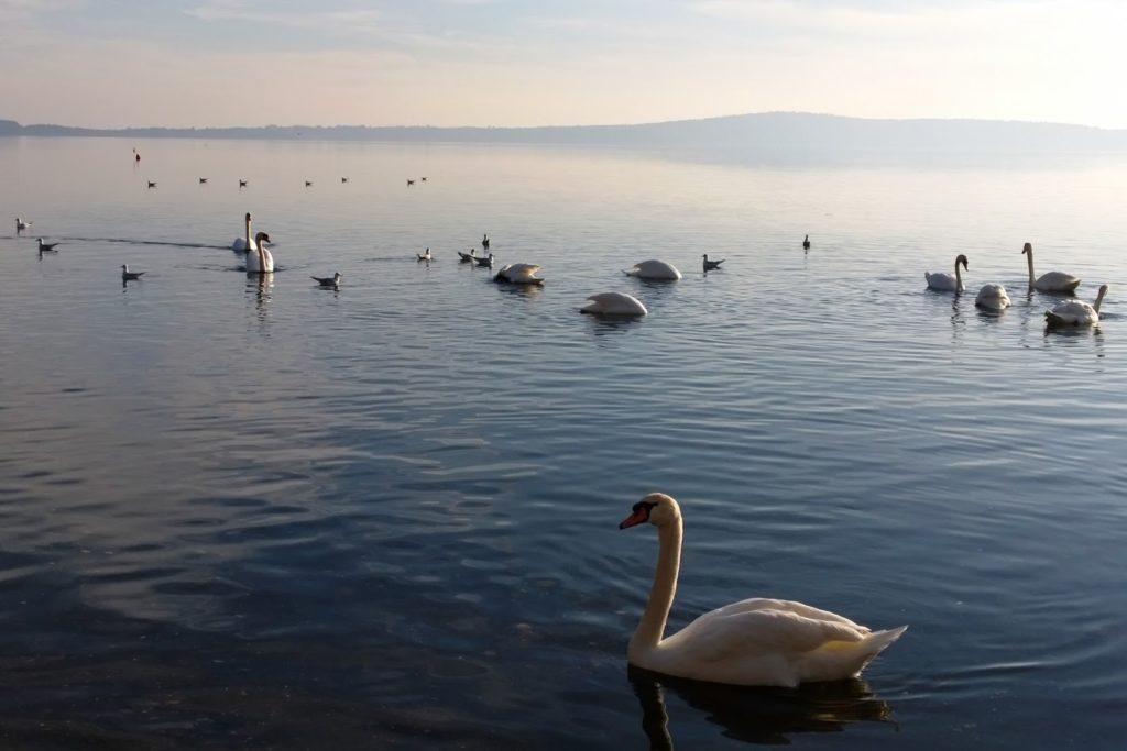 Cosa succede all 39 ecosistema del lago di bracciano for Cabine del lago vuoto